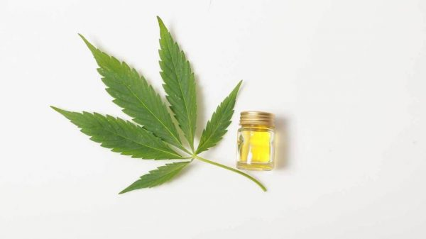high thc cannabis oil